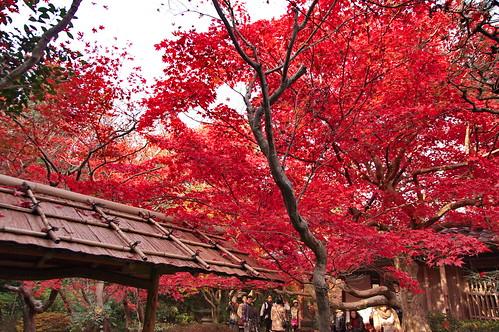 【写真】2012 紅葉 : 厭離庵/2020-10-15/IMGP7840