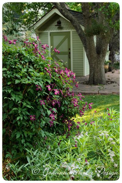 Summer-Garden-Shed-&-Clematis