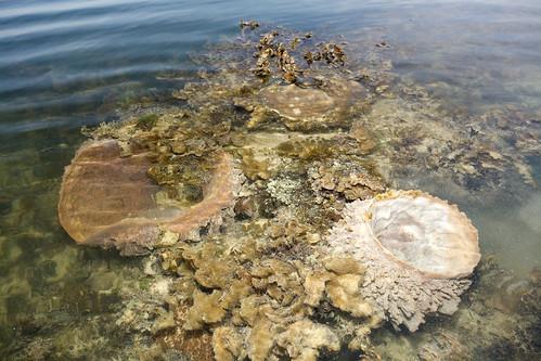 IMG_7750 barrel sponges