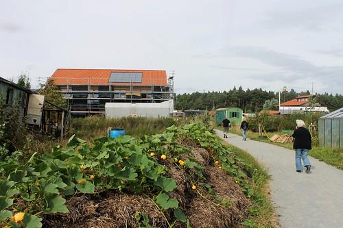 Wegesrand im Gartenbereich