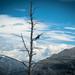 Small photo of Altitude bird