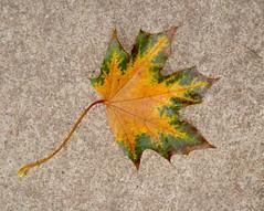 L'automne est arrivéé près de moi by Julie70