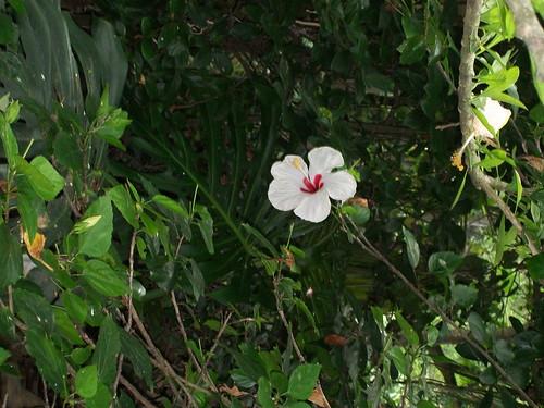 Enjoy Bermuda's local flora and fauna