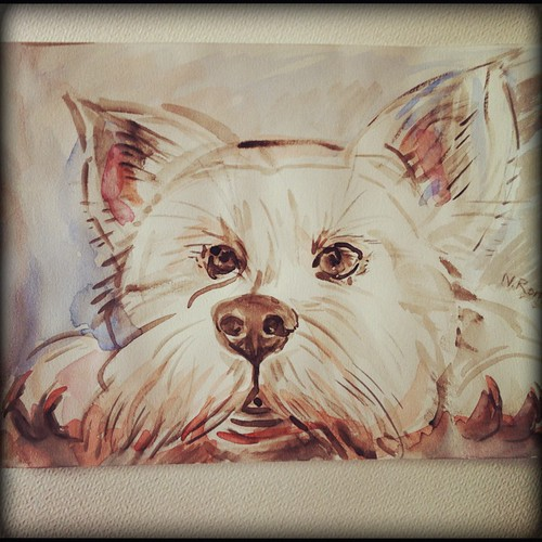 Little Westie by Sparrow Little