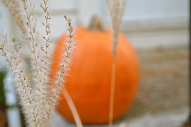 Pumpkin & brush
