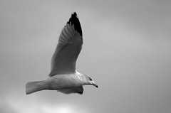 In flight. (Explored!!)