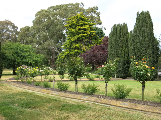 ballantyne memorial rose garden flickr photo sharing