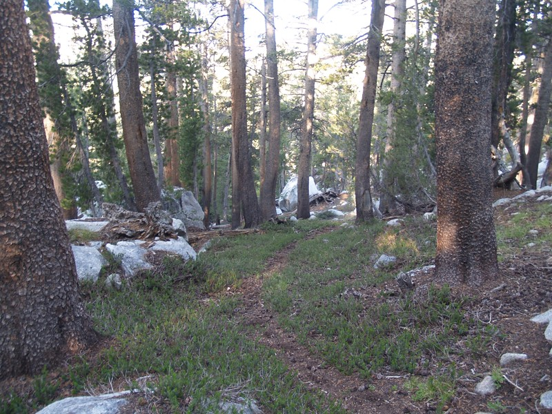 Descending the forested ridge between the upper and lower McCabe Lakes