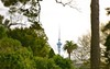 Sky Tower Auckland by Andy.Gocher