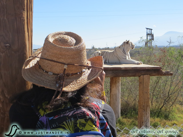 PIC: Out of Africa - Maya photographing the White Tiger