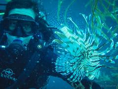 Lionfish, don't swim so close to me!