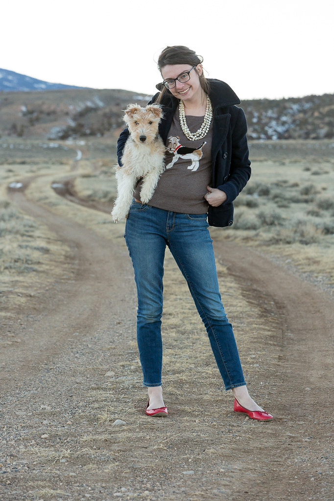 dog, terrier, joules, sweater, remix, wyoming, never fully dressed, withoutastyle,