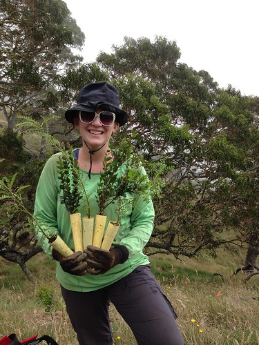 Volunteer Teia Schweizer with some ʻŌhiʻa and Māmane.