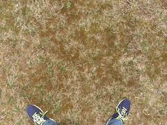 Grass_dry-flatgrass-sticks-greenpatches_wide.jpg