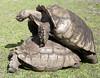 Tortoise procreate