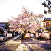 sakura '14 - cherry blossoms #10 (Honryu-ji temple, Kyoto) by Marser