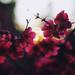 springtime by Cristina Hoch