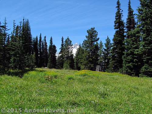 The first view of Mt. Hood through the trees on the Lookout Mountain Loop Trail, Mount Hood National Forest, Oregon
