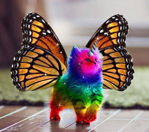 rainbowkitten