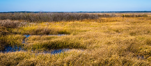 color outdoors landscapes florida gainesville wetlands d800 paynesprairie nikond800 littletinperson