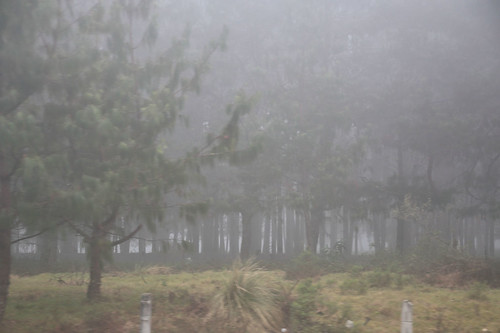 naturaleza fog forest madera flora carretera paisaje jr bosque drama niebla miedo presa vegetacion producciones tetrico dramatico tejocotal arbolesformados