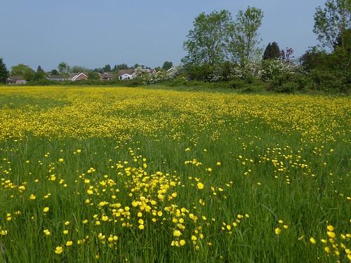 Meadow near the start