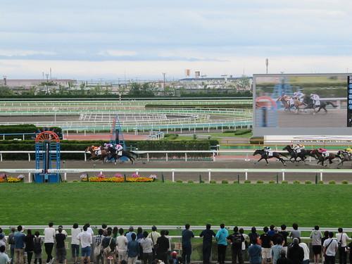 函館競馬場の一般席からの風景