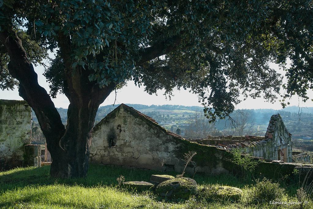 10.- 2016 - Quinta do Calvário (Paranheiras) (14)
