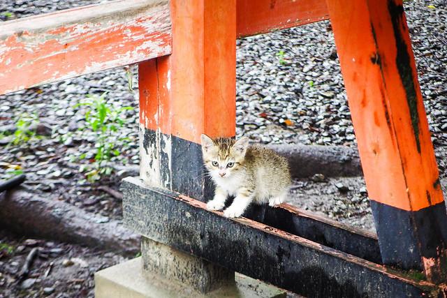 Today's Cat@2016-06-30