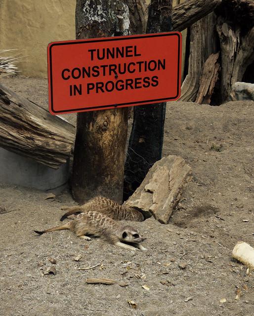 Tunnel Construction in Progress