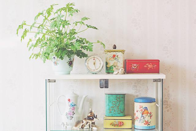 Home, geranium