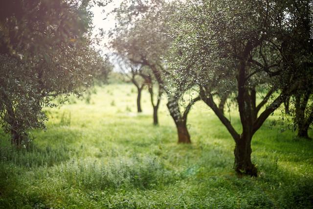olive. green.