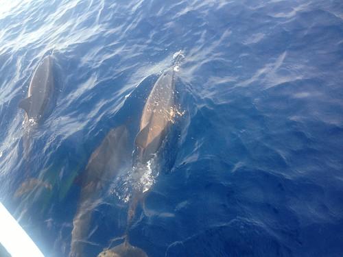 Maldives Kurumba12
