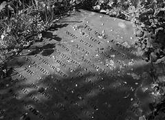 St Andrew's churchyard 8