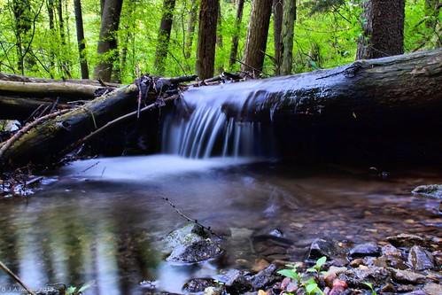 forest reading stream pa a77 tamron18200 sonyalpha noldestateforest punchesrun