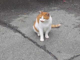 Daitokuji - Kitty