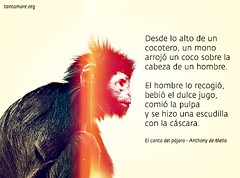 desde_lo_alto_de_un_cocotero2