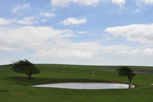 A Dew Pond