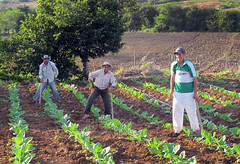 flower(0.0), garden(0.0), forest(0.0), agriculture(1.0), farm(1.0), field(1.0), soil(1.0), gardener(1.0), produce(1.0), farmworker(1.0), crop(1.0), plantation(1.0),