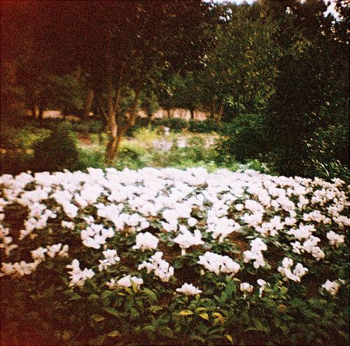 Flores del Park Güell