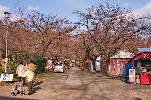 【写真】2013 桜 : 平野神社/2021-01-09/IMGP8702