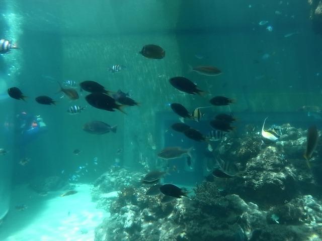 <p>水族館は浅い海の中から徐々に深いところへ導かれ・・・</p>