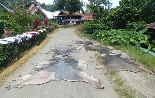 Sulawesi13-Lo'ko Mata-Tikala (8)