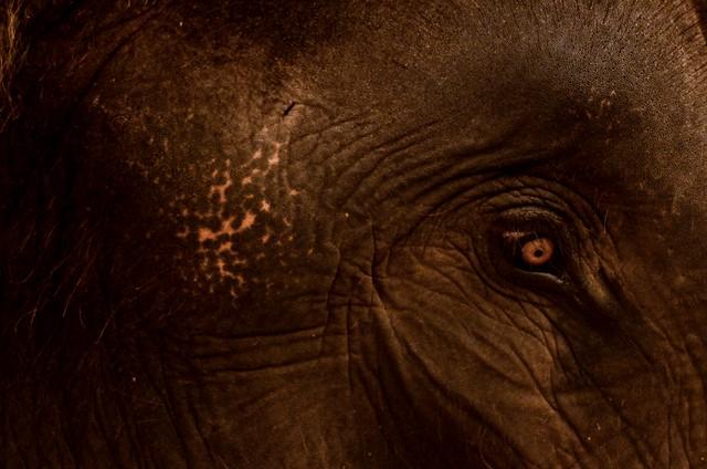 Elefante ad Ayutthaya