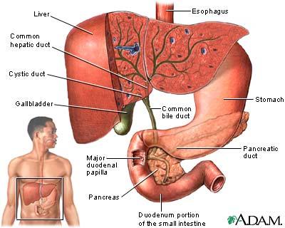 gallbladder-1