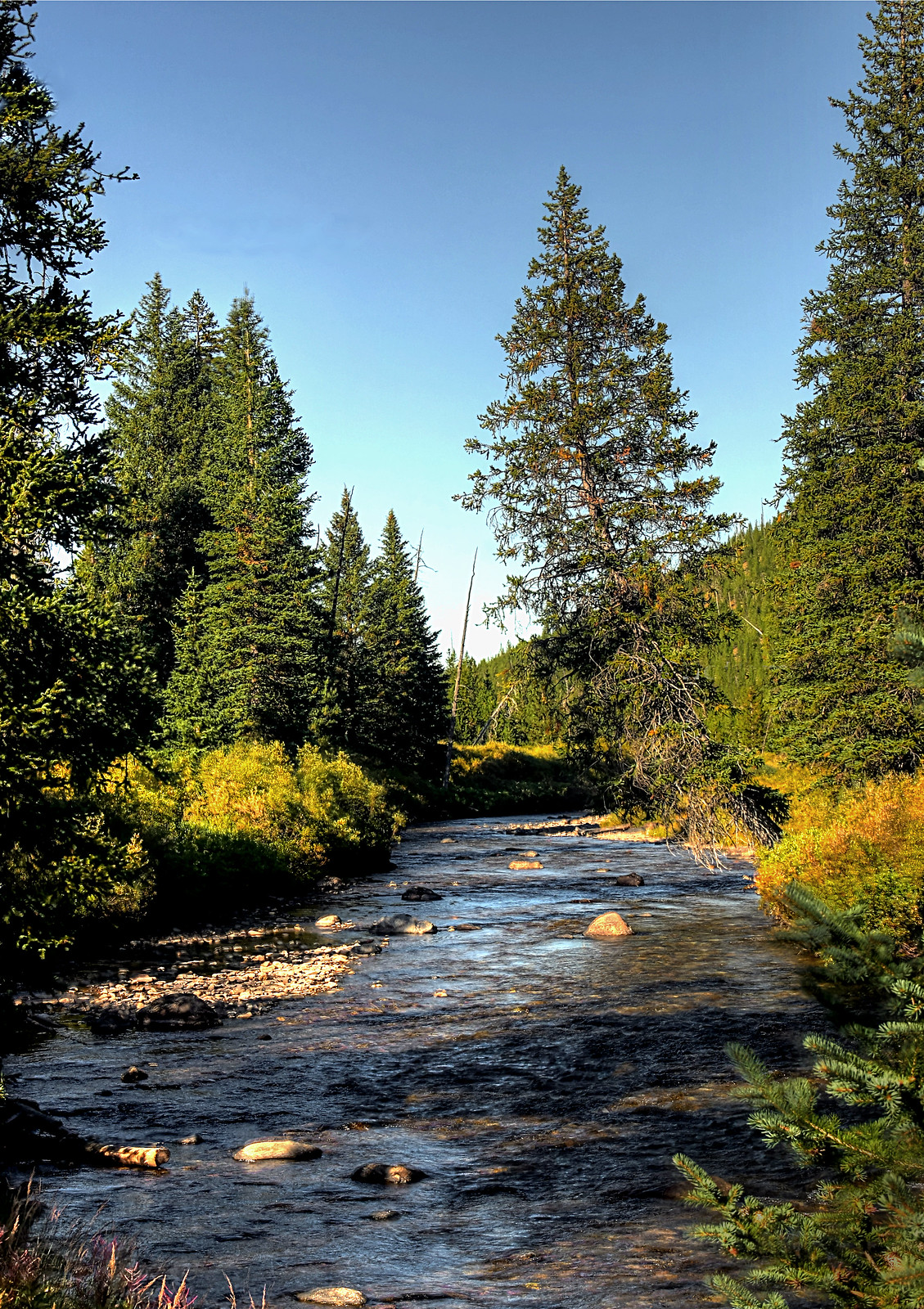 Fly fishing in yellowstone national park no fish fires for Fly fishing yellowstone