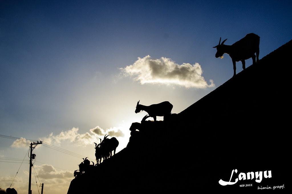蘭嶼-瞻仰羊老大的丰采