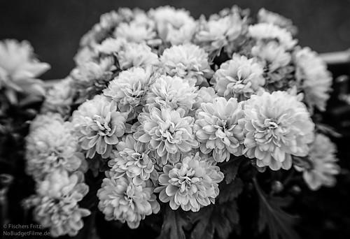 Lensbaby_Flowers.jpg
