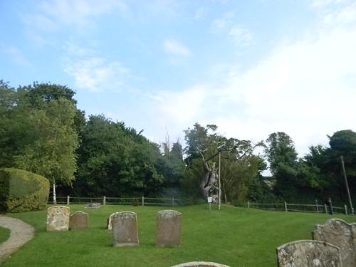 The Aldworth Yew...