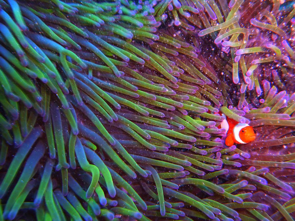 珊瑚和海鱼
